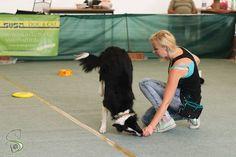 Dog Hacks, Dog Training, Dogs, Sports, Youtube, Hs Sports, Dog Training School, Pet Dogs, Doggies