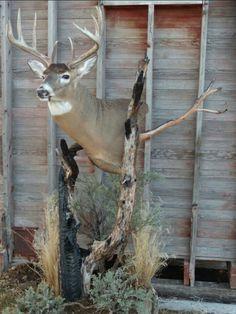 Pedestal deer mount