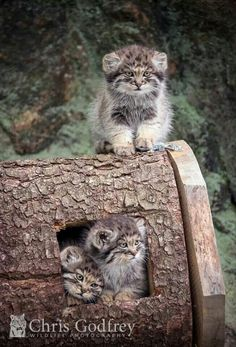 These kittens are to cute