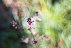spring flowers ∞