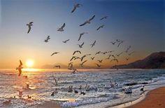 ocean bird party