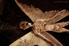 Fairies, Nymphs, & Demons - A Bizarre Collection of Strange Specimens  The specimens of Alex CF feature an incredible collection of cryptozoology. His page features amazing stories behind his collection that include descriptions of demons, fairies, nymphs, and other assorted oddities. His pieces are for sal