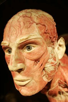 BODY Body Worlds tentoonstelling door Gunther von Hagens.