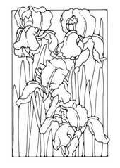 Flowers to Colour in: Dandi (free + Legit)