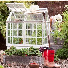 Coldframe, mini-greenhouse