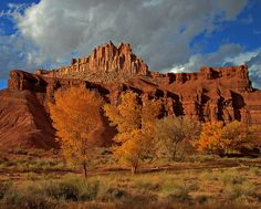 Golden Trees at The Castle, Capitol Reef