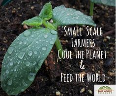 Small-scale+farmers+&+regenerative+agricultural+practices+restore+the+soil,+sequester+carbon,+and+help+halt+reverse+…