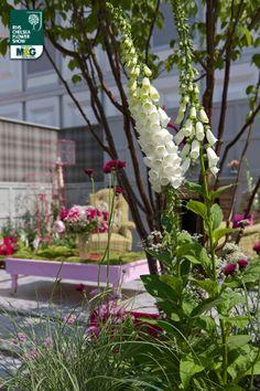 RHS Chelsea Flower Show - Fresh Garden - Fabric House of Fraser Chris Deakin & Jason Lock (Dealinlock Garden Design)