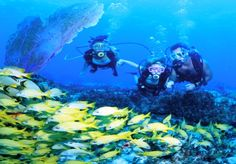 Scuba Diving on the clear waters of Andros Island in the Bahamas