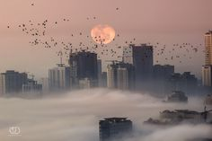"""Loving the soft pink colours. The birds just add to the ambiance of this photo.  """"Pink Moon """" by MO AOUN PHOTO."""