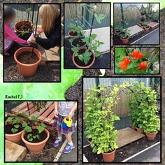Ideas for activities based around the summer season, for the Early Years classroom - from Stimulating Learning with Rachel Mud Kitchen For Kids, Growing Beans, Early Years Classroom, Preschool Garden, Garden Nursery, Outdoor Classroom, Eyfs, Outdoor Play, Primary School