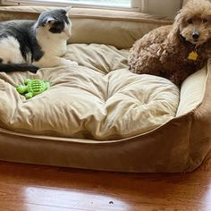 """Extremely rare sighting......Marty and J.R on the """"Cali King"""" bed! #catsanddogslivingtogether #catsanddogs"""