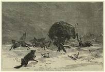 "Search results - ""buffalo"" - NYPL Digital Collections"