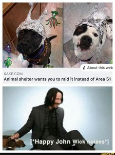KAKECOM Animal shelter wants you to raid it instead of Area 51 Repub if you hate jews - Repub if you hate jews - iFunny :) Funny Animal Memes, Cute Funny Animals, Stupid Funny Memes, Funny Relatable Memes, Funny Cute, Really Funny, Cute Dogs, Amor Animal, Wholesome Memes