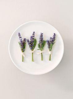 Lavanda lavander lavender lavendel