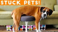 Animals Stuck In Stuff and Other Precarious Pets Compilation 2018 | Funny Pet Videos / #Funny #pet #videos from @PawPail