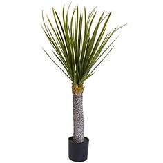 "nice  3' high & 20"" wide 699 leaves beautiful, life like trunk Beautiful, life like trunk   https://www.silkyflowerstore.com/product/nearly-natural-5438-yucca-tree-3-feet/"