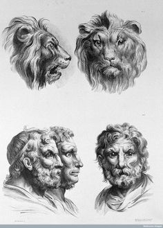"Renaissance-Era Drawings Reveal Early Ideas About Evolution. works by ""the greatest French artist of all time,"" according to Louis XIV. Charles Le Brun (1619-1690) used his artistry to compare human and animal faces, later inspiring Charles Darwin to write The Expression of the Emotions in Man and Animals."