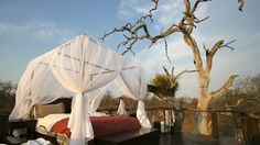 Spend half your honeymoon in a luxury lodge and the other half in an outdoor suite at the Lion Sands Ivory Lodge, Sabi Sand Reserve, South Africa