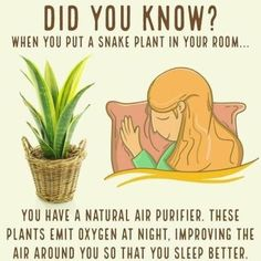 Snake Plant in the bedroom. All plants give off oxygen during photosynthesis whi. Snake Plant in t Health Benefits, Health Tips, Health Recipes, Health Goals, Health Articles, Health Facts, Health Quotes, Women's Health, Mental Health