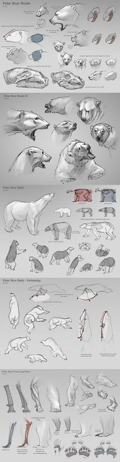 Polar Bear Heads Drawing Tutorial | Drawing References and Resources | Scoop.it