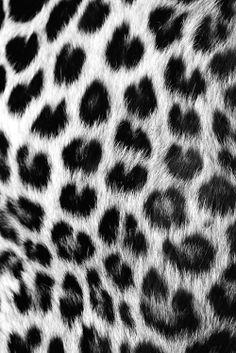 love will tear us apart Cheetah Print Background, Leopard Print Wallpaper, Leopard Prints, Black Wallpaper, Animal Prints, Patterns In Nature, Textures Patterns, Print Patterns, Leopard Tapete