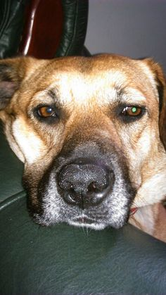 #dog # doglove