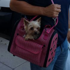 Chloe being carried by Daddy :) #Yorkie #Yorkshire Terrier #Puppy Purse