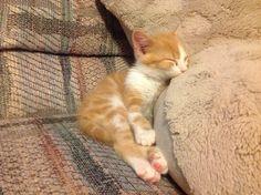 Nap time! :)