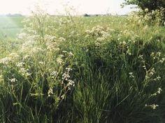 Grass fields in the trailer park Slytherin, Mythos Academy, Solas Dragon Age, Flowey Undertale, Chise Hatori, Tuck Everlasting, No Rain, 6 Photos, Pictures