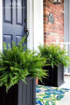 The Easiest Porch Planters Ever Super Simple And Fast Containers For Your Porch. In Just A Few Minutes Your Porch Will Go From Drab To Amazing Fern Porch Planter Porch Container Idea Fern Planters. Fern Planters, Front Porch Planters, Black Planters, Garden Planters, Plants For Porch, Flowers For Planters, Large Diy Planters, Porch Topiary, Flower Pots