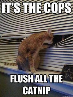 LOL!      #Cats #Funny
