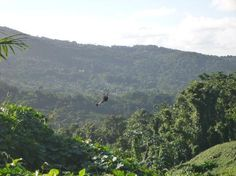 Ziplining in Puerto Rico - You have to do this.  This is the best thing ever!