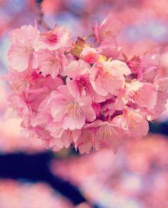 河津桜 #sakura #CherryBlossom Cherry Blossom Japan, Cherry Blossoms, Aesthetic Photo, Pink Aesthetic, Pink Wallpaper, Nature Animals, Green Flowers, Four Seasons, Spring Time