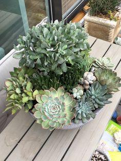 Succulent Arrangements, Succulents, Picture Design, Plants, Pictures, Art, Photos, Art Background, Kunst
