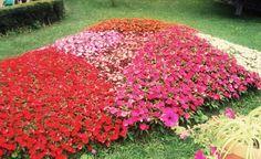 Sovata's flowers