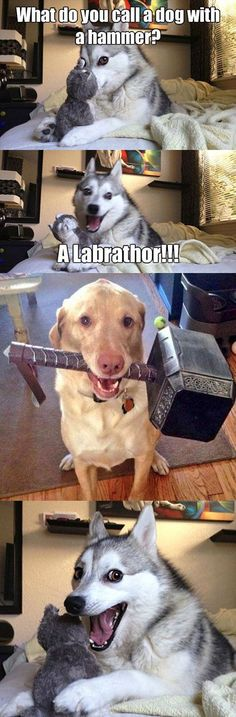 What do you call a dog with a hammer? - Funny Husky Meme - Funny Husky Quote - Top 30 Funny Marvel Avengers Memes The post What do you call a dog with a hammer? appeared first on Gag Dad. Funny Husky Meme, Funny Animal Jokes, Dog Quotes Funny, Cute Funny Animals, Funny Animal Pictures, Funny Images, Pun Husky, Husky Jokes, Humor Quotes