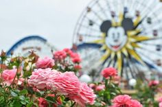 The flowers of Paradise Pier #CaliforniaAdventure #Disneyland