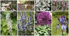Perenials nordic garden Perenials, Garden, Plants