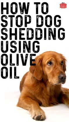 We have got you with an effective solution on how to stop a dog from shedding with the help of olive oil. Dog Shedding Remedies, Stop Dog Shedding, Hair Shedding, Puppy Training Tips, Best Dog Training, Matted Dog Hair, Dog Hair Removal, Pet Shed, Dog Pin