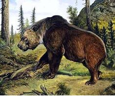 Extinct Florida Cave Bear