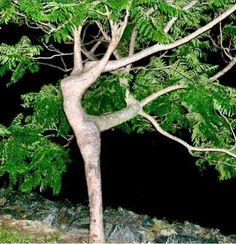 Strom nebo baletka?