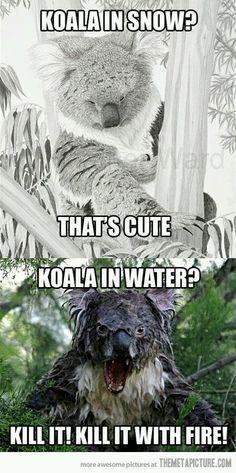 Koala in snow. That's cute.  Koala in water? Kill it!  Kill it with fire!