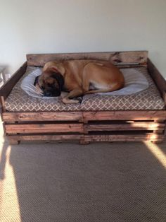 Also known as the English Mastiff this giant dog breed gets known for its splendid, good nature. Big Dog Beds, Pet Beds, Big Dogs, Pallet Dog Beds, Chinese Dog, Dog Rooms, Dog Houses, Dog Care, Doge