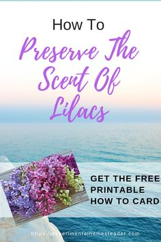 Do you love the lilac scent? Learn how to preserve the scent of lilacs yourself. You can use the fragrance extraction in homemade bath and body products. Cut Flowers, Purple Flowers, Lilac Pruning, Army Medic, Hobbies For Adults, Essential Oils Soap, Square Foot Gardening, Diy Projects For Kids, Lilacs