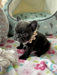 Super Cute Puppies, Cute Little Puppies, Cute Dogs And Puppies, Cute Little Animals, Cute Funny Animals, Doggies, Baby Animals Pictures, Cute Animal Videos, Cute Animal Pictures
