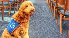 Dans ce salon funéraire, une chienne de thérapie redonne le sourire aux familles endeuillées.
