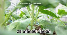 Edible Garden, Garden Pots, Farm Gardens, Companion Planting, Compost, Plant Leaves, Herbs, Plants, Tree Tree