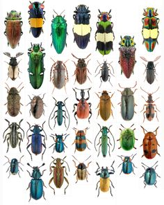 meet-the-beetles-0-1.png (800×1004)