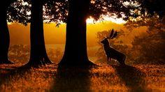 beautiful forest morning scene wallpaper download free hd